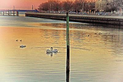 Swans On A Lake Art Print by Alex AG