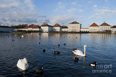 Swans Photograph - Swans Seen At Nymphenburg Palace by Andrew  Michael