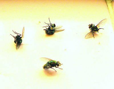 Swatting Fly Photograph - Swat Team by Joe Jake Pratt