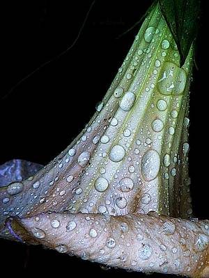 Photograph - Sweet And Rainy by Chris Berry