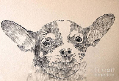 Sepia Ink Drawing - Sweet Chi by Robbi  Musser