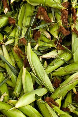 Sweet Corn Farm Photograph - Sweet Corn by Lauri Novak