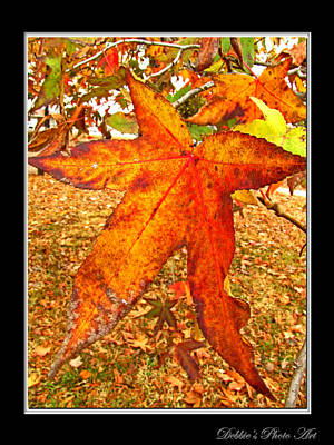 Photograph - Sweet Gum Leaves II by Debbie Portwood