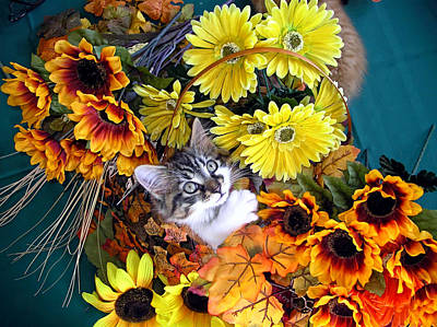 Kitten Photograph - Sweet Kitten In A Fall Flower Basket With Large Eyes Looking Up - Kitty Cat Grasping Autumn Leaves by Chantal PhotoPix