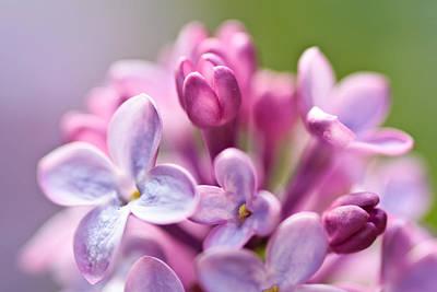Sweet Lilac Art Print by Mitch Shindelbower