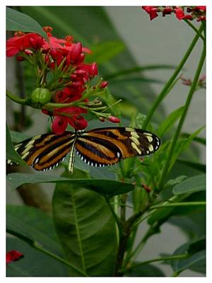Photograph - Sweet Nectar by Frank Wickham