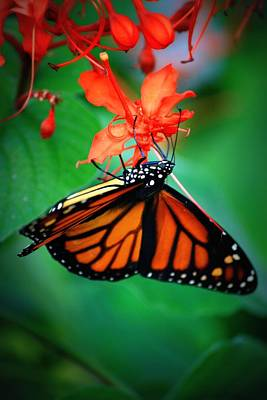 Fluttering Photograph - Sweet Nectar by Mandy Shupp