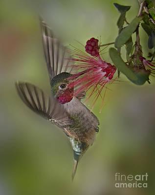 Photograph - Sweet Nectar by Susan Candelario