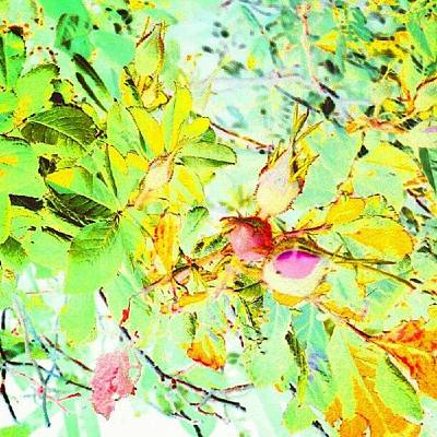Impressionism Wall Art - Photograph - Sweet Rose Buds #android #andrography by Marianne Dow