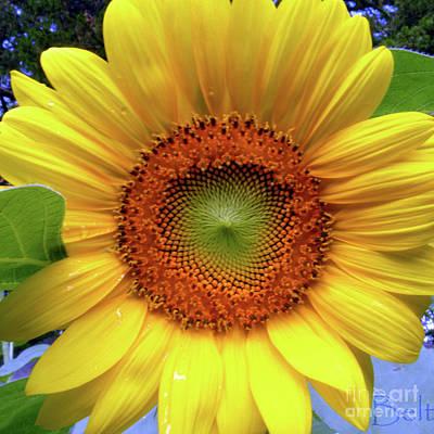 Sweet Summer Sunflower Art Print by Christine Belt