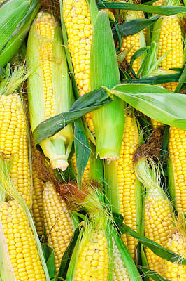 Photograph - Sweetcorn by Tom Gowanlock