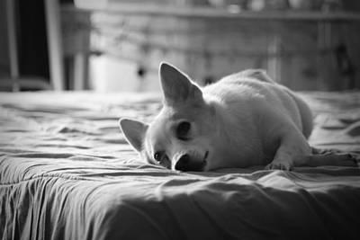Best Friend Photograph - Sweetheart by Mandy Shupp