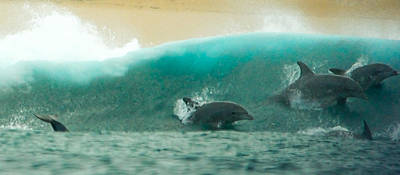 Photograph - Swim Thru by Alistair Lyne