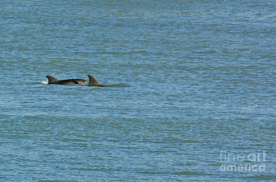 Photograph - Swimming Dolphin Pair by Terri Mills