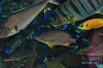 Swimming Fish Art Print by Andrea Simon