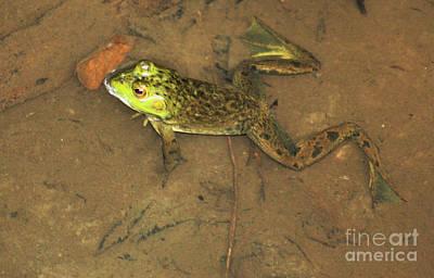 Swimming Frog Art Print by Nick Gustafson