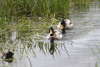 Photograph - Swimming Together by Terri Thompson