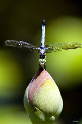 Blue Dragon Fly Photograph - T Shape by Lisa  Spencer