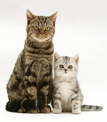Gray Tabby Photograph - Tabby Cat And Kitten by Jane Burton