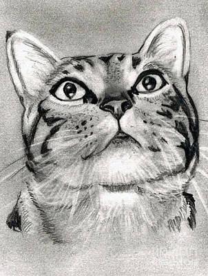 Gray Tabby Drawing - Tabby Cat Pencil Drawing by Claudiu Radulescu