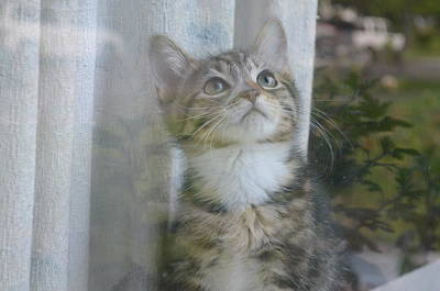 Y120907 Photograph - Tabby Kitten In Window by Photo by Laurie Cinotto
