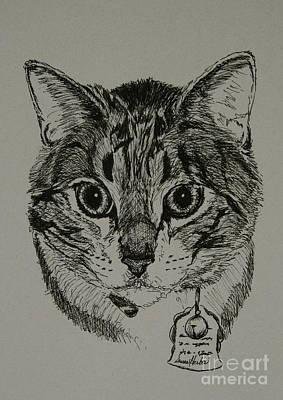 Drawing - Tabby by Susan Herber