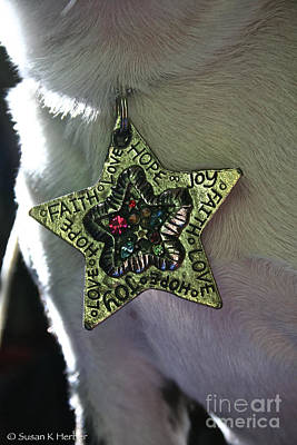 Canine Jewelry Photograph - Tag Me True by Susan Herber