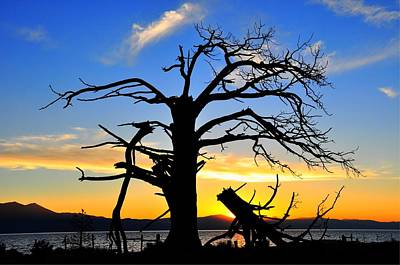 Tahoe Sunset With Dead Tree Silhouette Art Print by Bruce Friedman