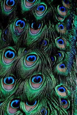 Photograph - Tail Feathers by Elizabeth  Doran