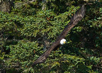 Taking Flight Original by Adam Pender