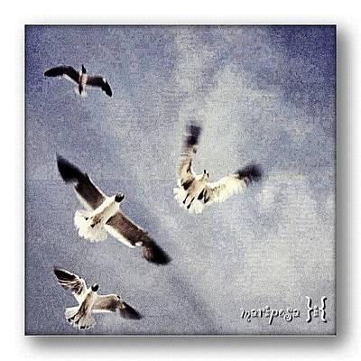 Angle Photograph - Taking Flight by Mari Posa