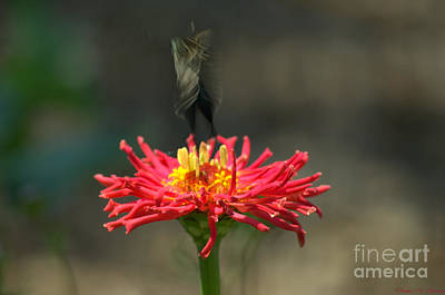 Photograph - Taking Off by Donna Brown