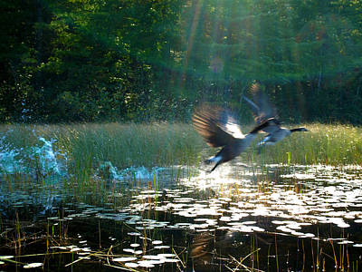 Photograph - Taking Wing by Katherine Huck Fernie Howard