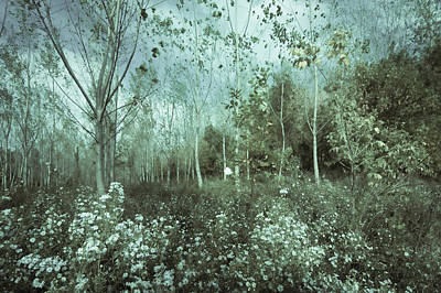 Photograph - Tale Of The Seasons by Akos Kozari