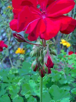 Tall Geranium Flower And Buds Art Print by Padre Art