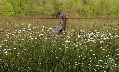 Photograph - Tall Grass And Daisies by Erica Hanel
