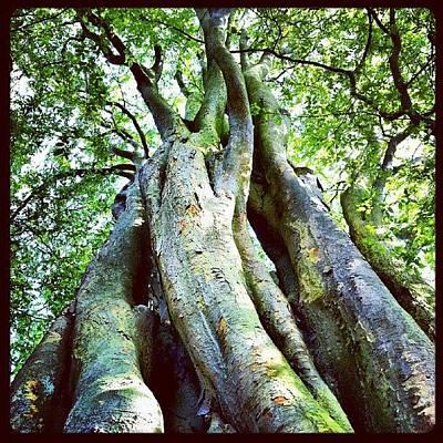 Skin Photograph - #tall #green #tree #nature #trunk #skin by K H   U   R   A   M
