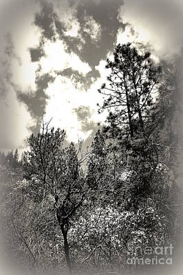 Art Print featuring the photograph Tall Trees In Lake Shasta by Garnett  Jaeger