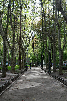 Photograph - Tall Trees Of Madrid by Lorraine Devon Wilke