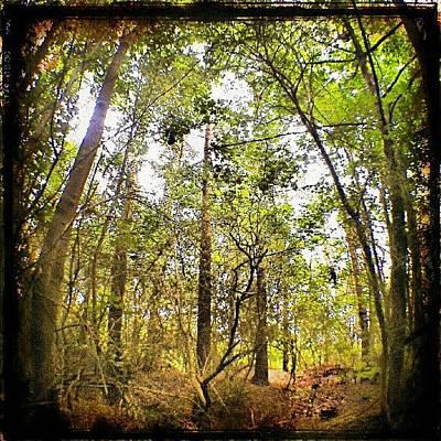 Woodland Wall Art - Photograph - Tall Trees by Vicki Field