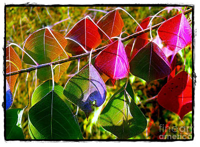 Photograph - Tallow Leaves In Color by Judi Bagwell