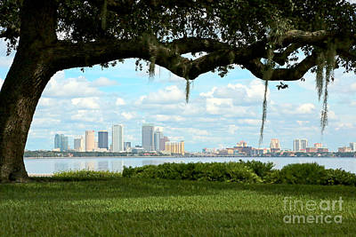 Tampa Skyline Through Old Oak Art Print by Carol Groenen