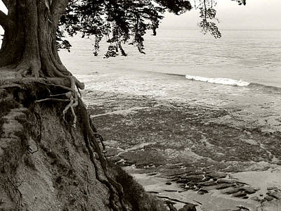 Photograph - Tangled Overlook - Bw by Kathleen Grace