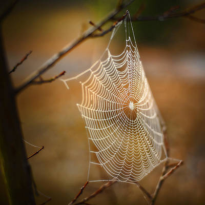 Photograph - Tangled Web by Brenda Bryant