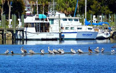 Photograph - Tarpon Springs Florida by Jo Sheehan