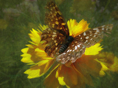 Tattered Wings Art Print by Cindy Wright