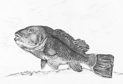 Fish Underwater Drawing - Tautog by Kathleen Kelly Thompson