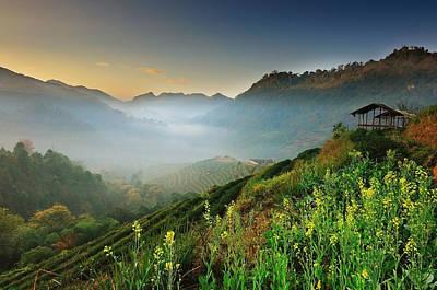 Y120831 Photograph - Tea Garden 2000 Chiangmai by Nutexzles
