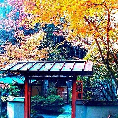 Apple Wall Art - Photograph - Tea House Gate In The Fall by Anna Porter