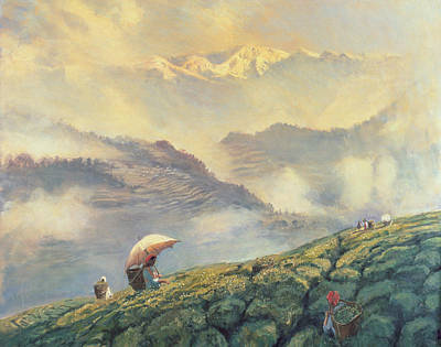 Commodities Painting - Tea Picking - Darjeeling - India by Tim Scott Bolton